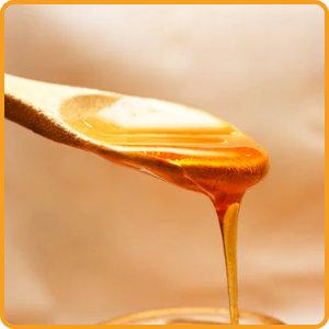 Fachwissen Honig