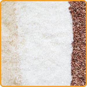 Fachwissen Reis